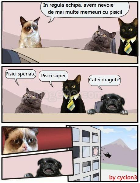 Memeuri cu pisici