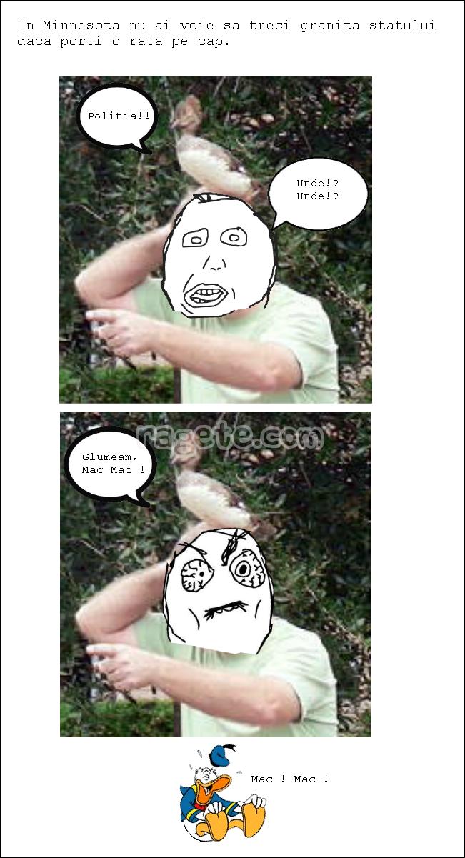 Legi Stupide 4