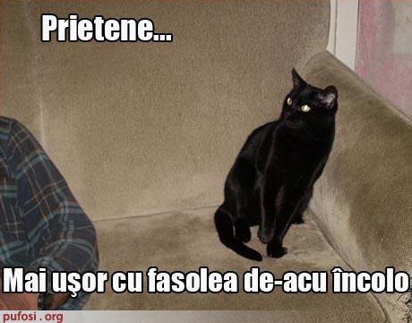 poze-amuzante-poza-amuzanta-pisica-isi-atentioneaza-stapanul-sa-nu-mai-manance-fasole