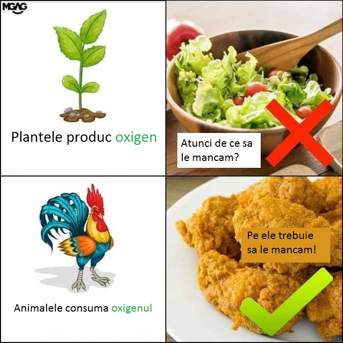 plantele produc oxigen, nu ar trebui sa le mancam, animalele consuma oxigenul, pe ele ar trebui sa le mancam